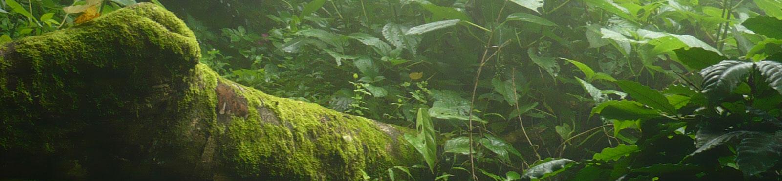 imagen low carbon